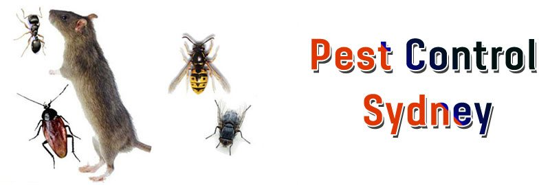 Pest Control Mogo Creek