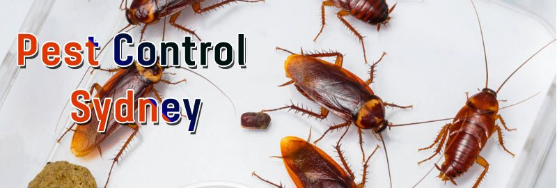Pest Control Cammeray