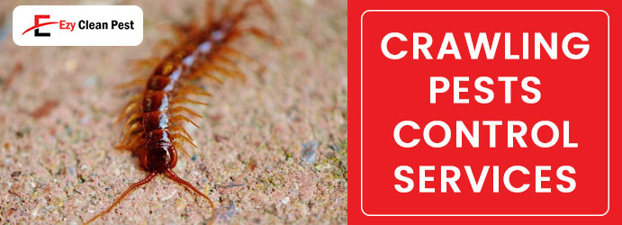 Crawling Pests Control Services