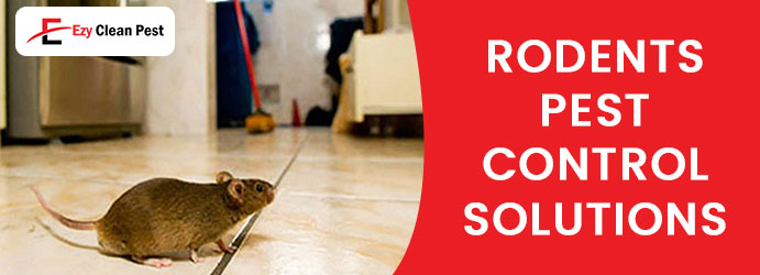 Rodents Pest Control Solutions