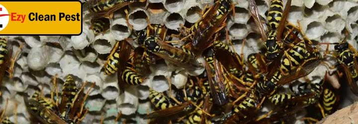 Understanding Wasp Infestation Thoroughly