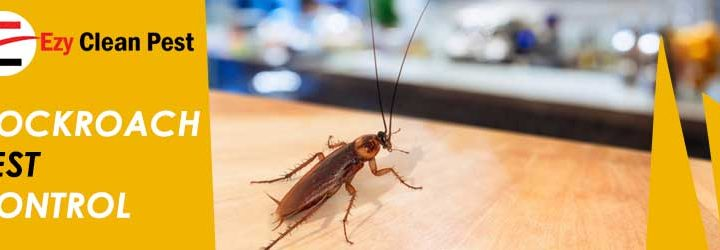 Easy Home Remedies for Pest Control