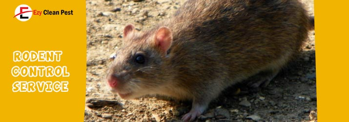 Rodent Identification