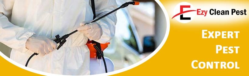 Expert Pest Control York Plains