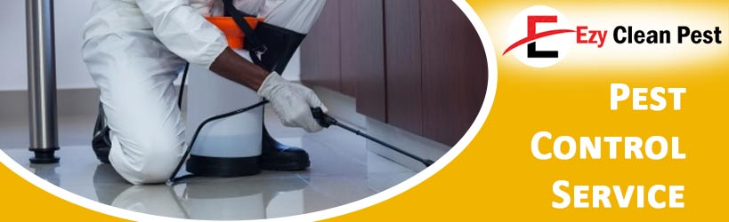 Pest Control York Plains