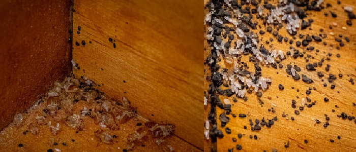 Best Way to Remove Bed Bugs From Your Home